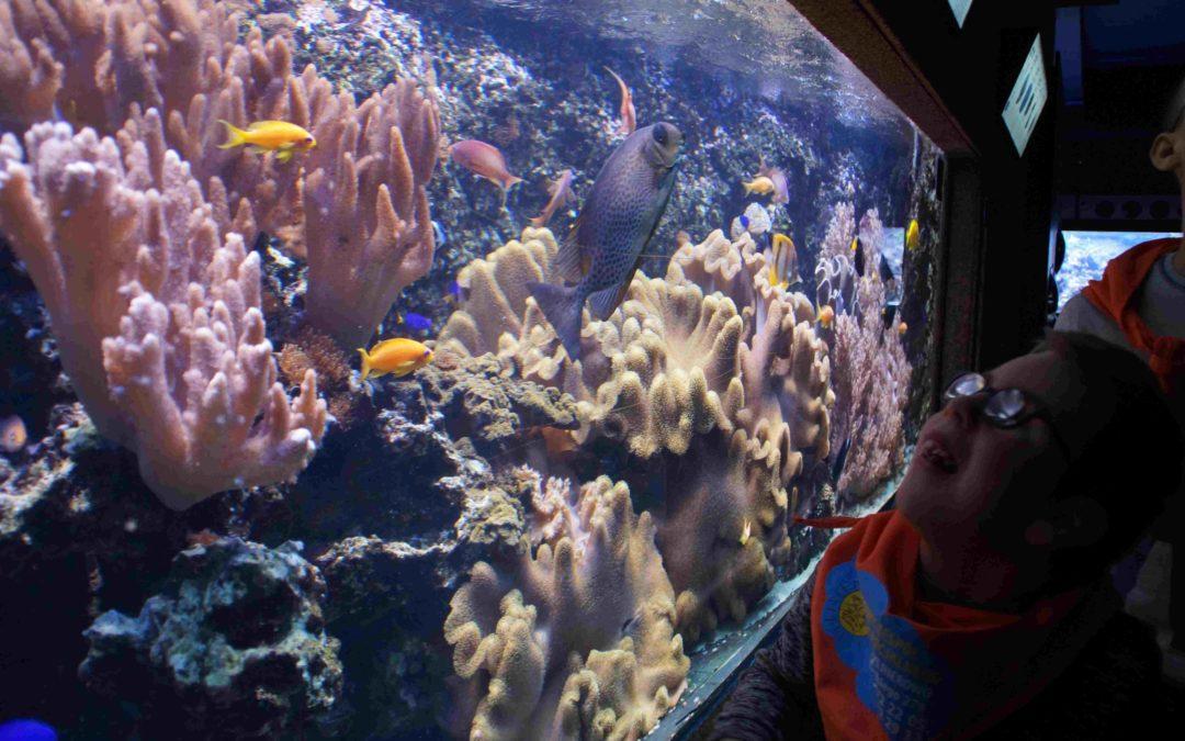 Warsztaty koralowe wAkwarium