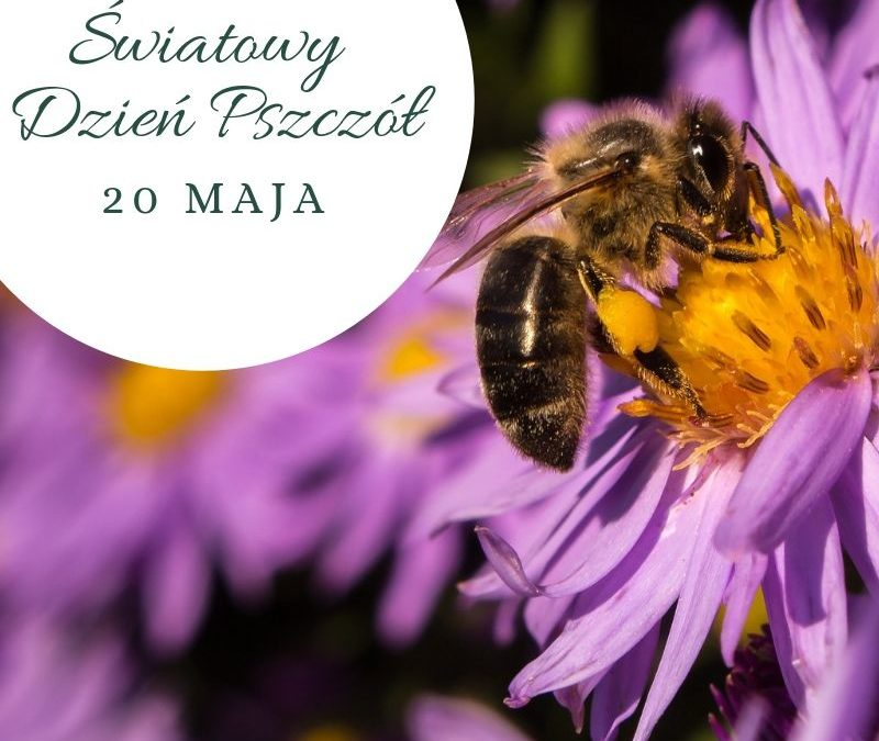 Nasza szkoła miejscem przyjaznym pszczołom