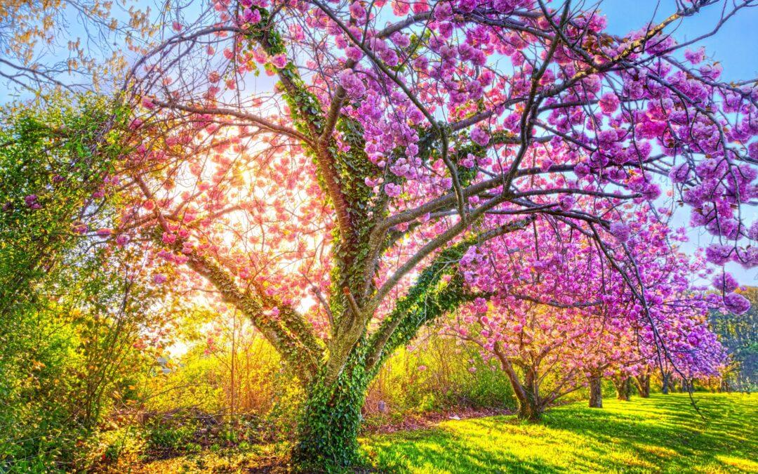 Wiosenne drzewo – rozstrzygnięcie konkursu!