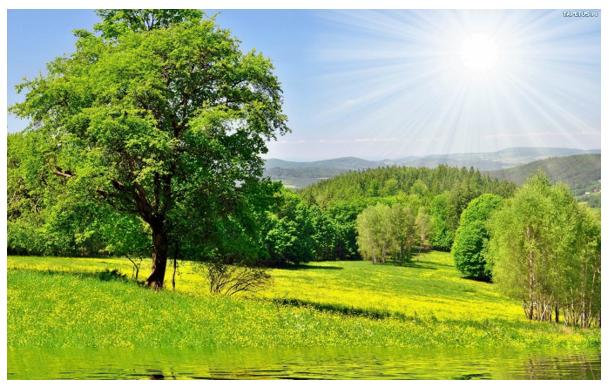 Drzewo latem – konkurs plastyczny